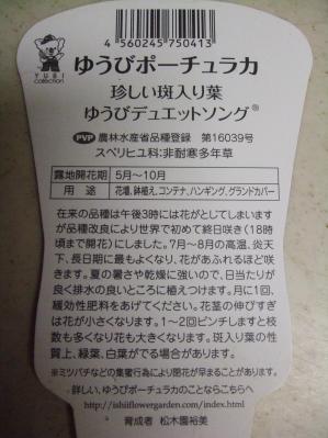 ゆうびポーチュラカ珍しい斑入り種~ゆうびデュエットソング説明書き~2013.09.17
