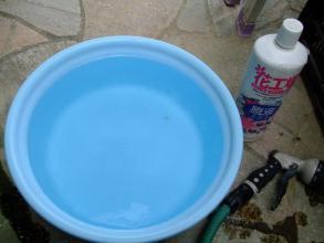 リトープス&コノフィツム~たらいに液肥水を作り皮を剥かないで底面給水してみます♪2013.09.06