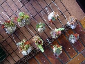 多肉の貝殻寄せ植え~♪柔らかいアルミ線で自由自在に向きを変えたりして吊るせます♪2013.11.17