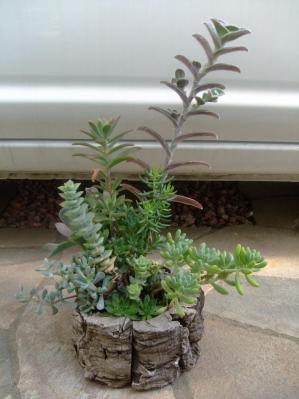 寄せ植え講習会(2012.05)で作った寄せ植え~白絹姫が長~く伸びて開花中です♪2013.09.27