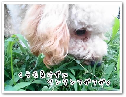 DSC_0223 (1)