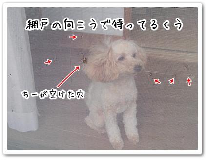 DSC_0264 (1)