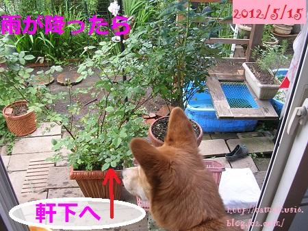 DSCN6148a_20130423200828.jpg