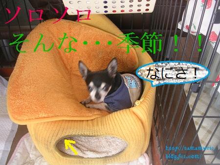 DSCN6985a.jpg