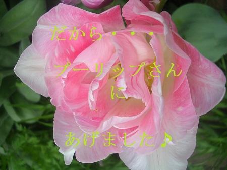 DSCN7948a.jpg