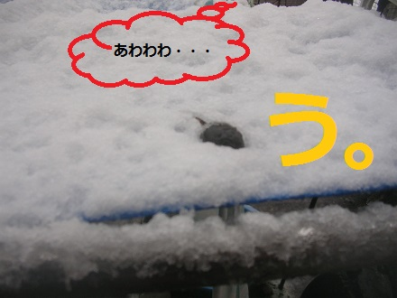 DSCN8700a.jpg