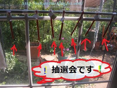 DSCN9439a.jpg