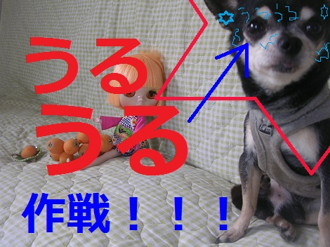 DSCN9824a_201311132052301b5.jpg