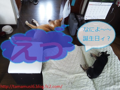 DSC_0366a_20130819183213c84.jpg