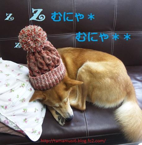 DSC_0495a.jpg