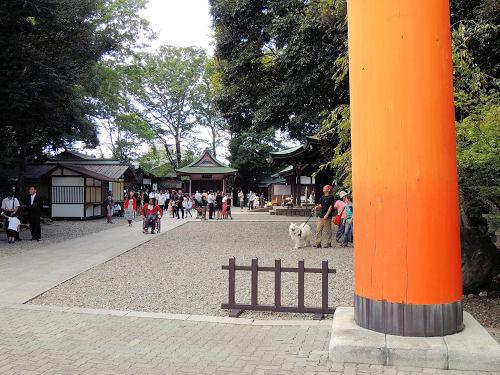 130929kawahikawa03.jpg