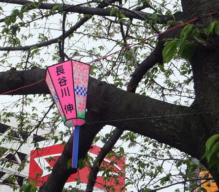 葉桜にかかる提灯