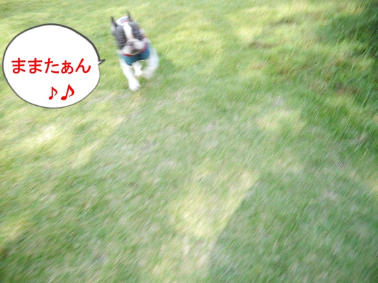 P1150713.jpg