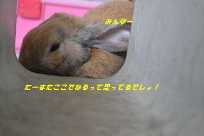 004_20130810090701bc4.jpg
