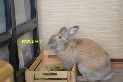 041_20131119144507fca.jpg