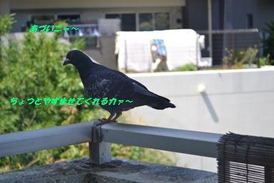 055_20130714132522.jpg