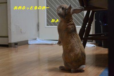 056_2013110409582525c.jpg