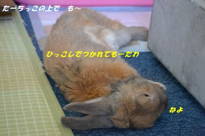 063_20130601121732.jpg