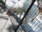東武動物公園4