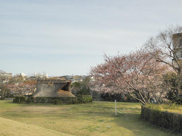 大歳山遺跡公園の桜
