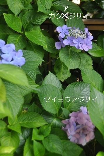 002_20130702232300.jpg