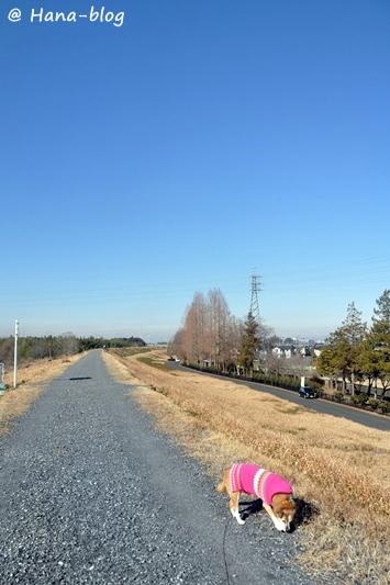 川島白鳥 055