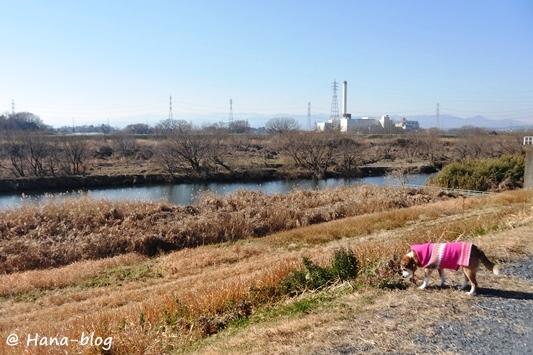川島白鳥 119