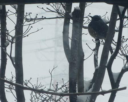 雪の日の来訪者