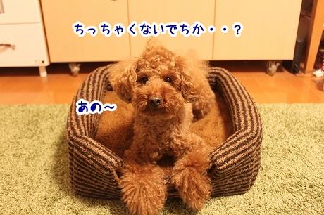 IMG_0014_2013111016371383e.jpg