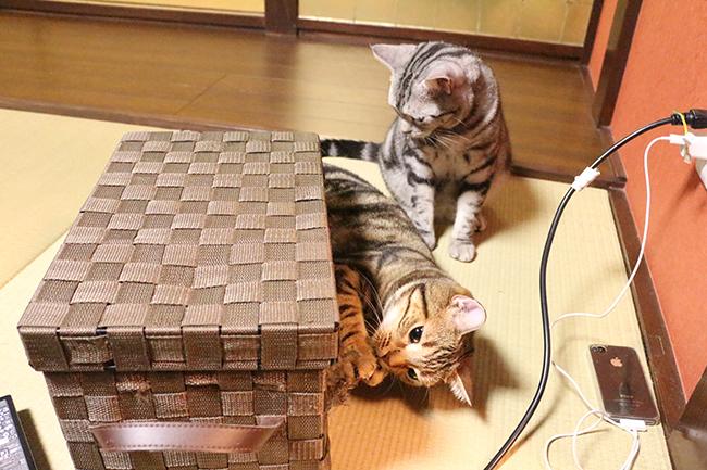 blog_000004171.jpg