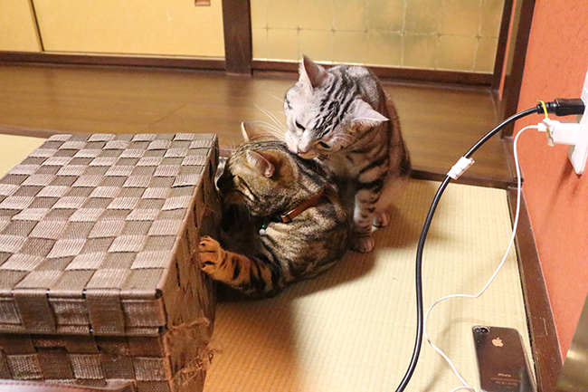 blog_000004173.jpg