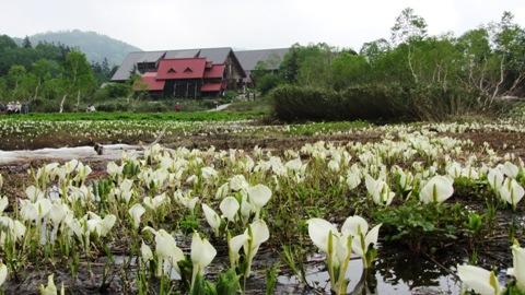 7水芭蕉で有名になった栂池自然園