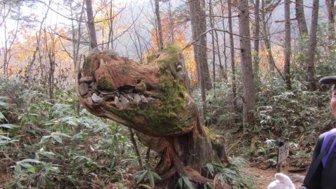 登山道にあるゴジラの木