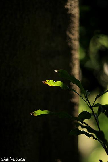 木漏れ日透過光