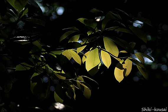 黄色い透過光