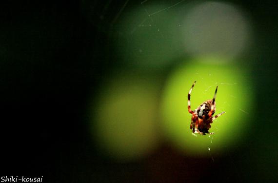 蜘蛛と透過光