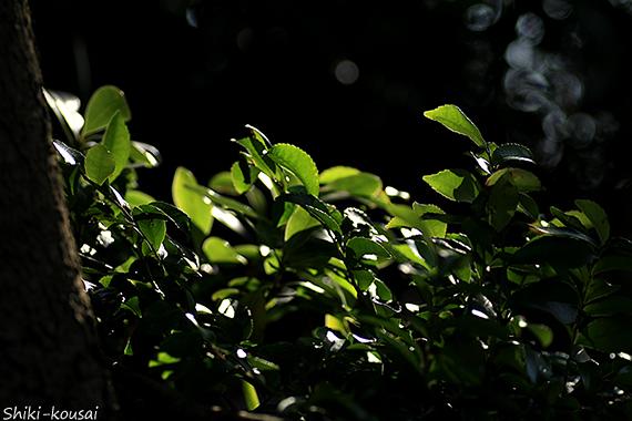 透過光・反射光