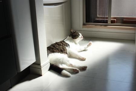 日光浴シーズンね♪