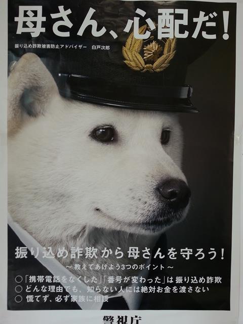 wall_sinpai.jpg