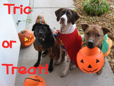 Halloween-Dog-Costumes-UK.jpg