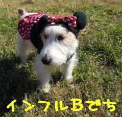 bbbbbbp.jpg