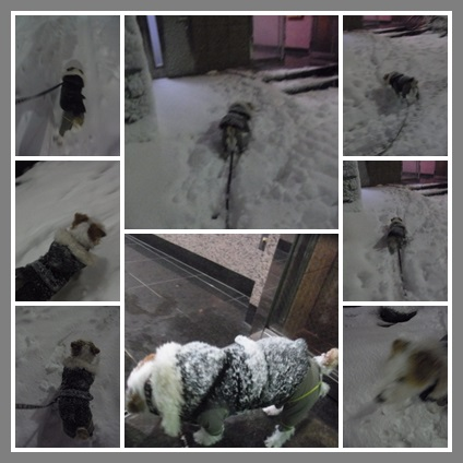 snownighp.jpg