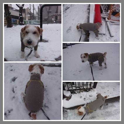 snowsnowp.jpg
