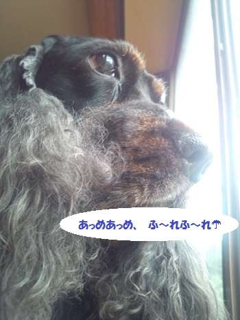 DSC_1000.jpg