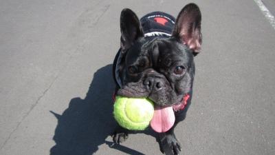 幸ちゃんボールが大好き