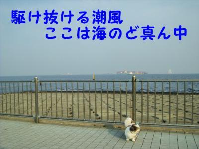P8133079.jpg