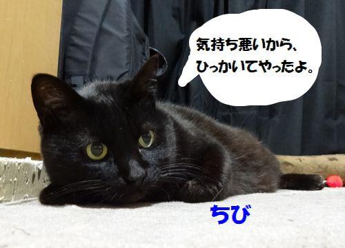 559a.jpg