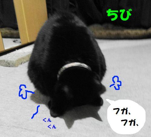 591.jpg