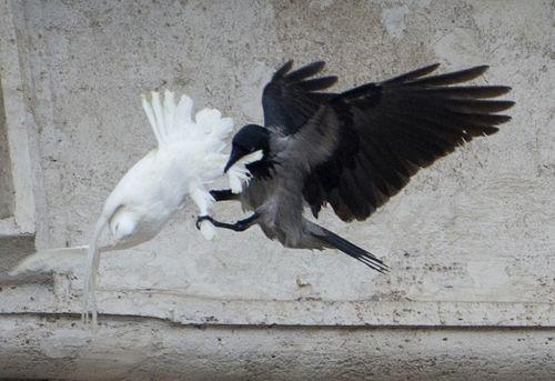 バチカンで放された平和のハトがimage