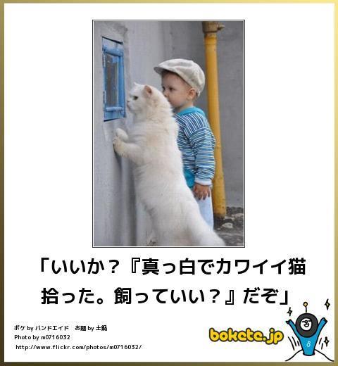 ボケてネコ(いいか)image